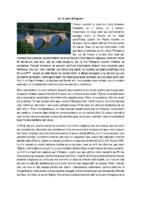 8-Sur le pont d'Avignon